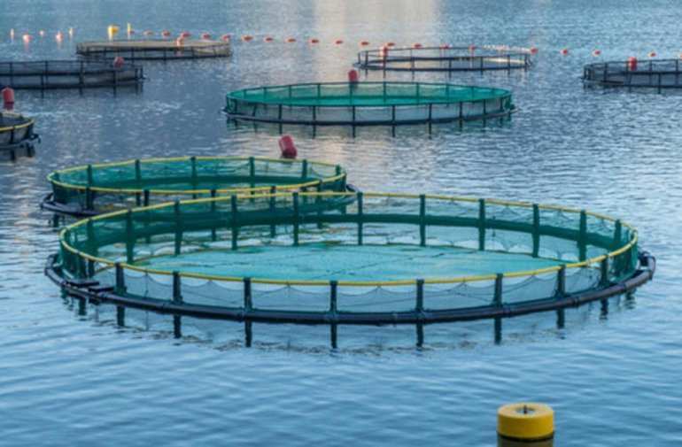 Fish farming in floating cages project on track: MME official