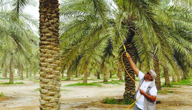Protection efforts see palm trees number reach 1mn