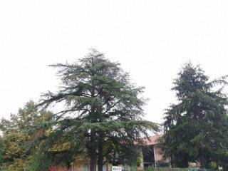 Foto 1 di Rustico / Casale strada per Dogliani, Farigliano