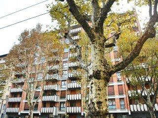 Foto 1 di Appartamento corso Filippo Turati 7, Torino (zona Crocetta, San Secondo)