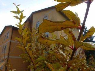 Foto 1 di Bilocale via San Rocco 6, Vicoforte