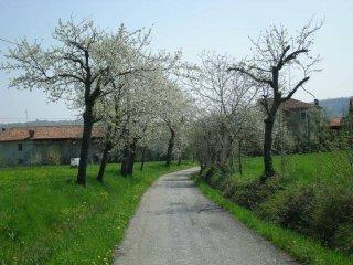 Foto 1 di Rustico / Casale Villanova Mondovì