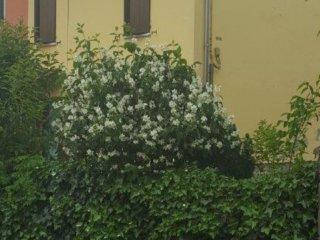 Foto 1 di Appartamento Via Rosso, Fontanellato