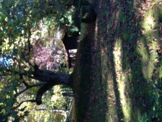 Foto 1 di Villa Lizzano In Belvedere
