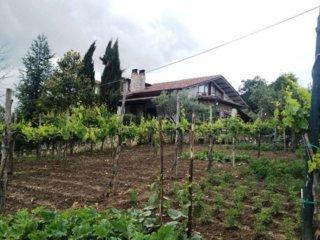 Foto 1 di Villa Bifamiliare via Macchia Santa Maria, Montemiletto