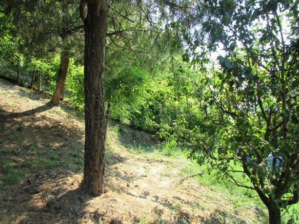 Foto 22 di Casa indipendente strada Provinciale 41, San Martino Alfieri