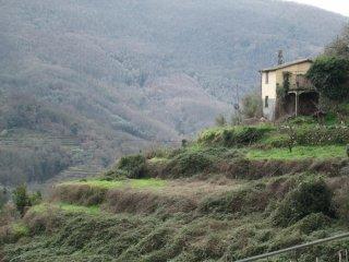 Foto 1 di Casa indipendente loc.Campo di Ne, Carasco