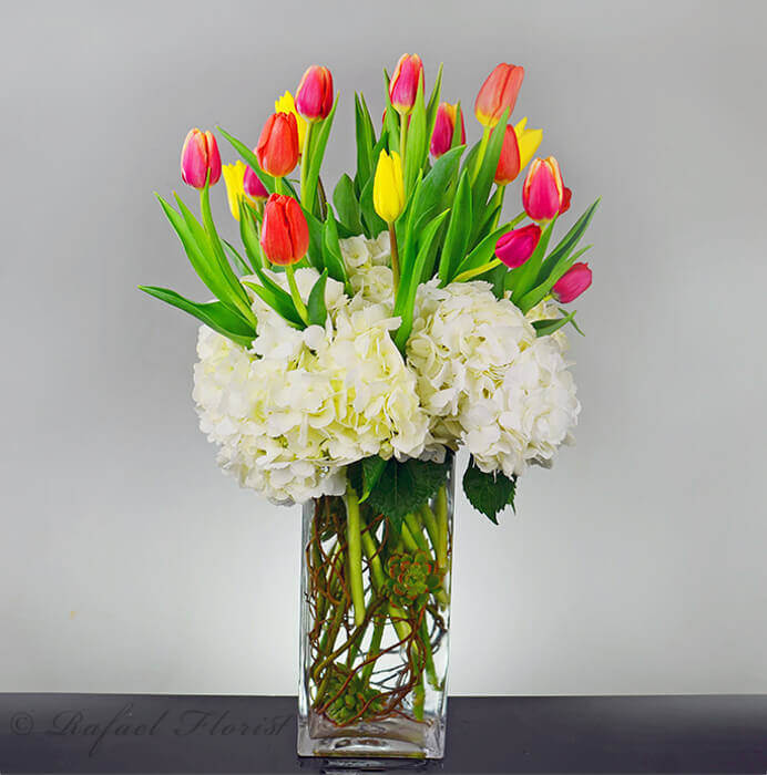 c0f3e154fea9 Beautiful arrangement of Rainbow tulips surrounded by white hydrangeas