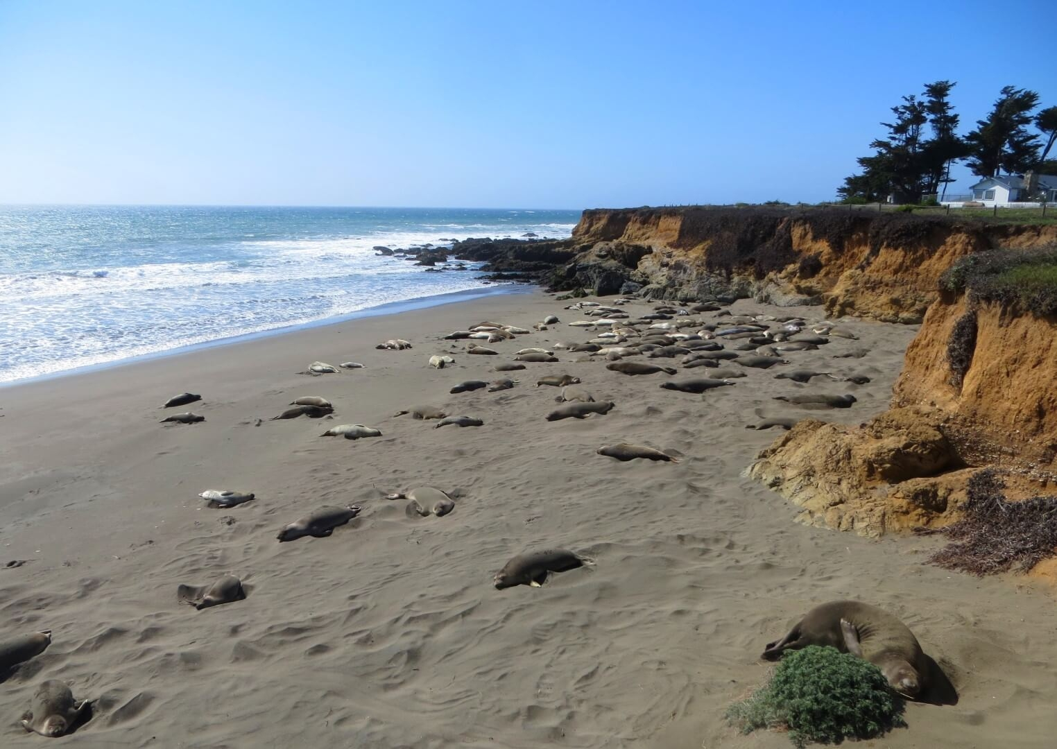 things to do in san simeon