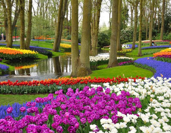 Five-Star Tulips Cruise Fly and Cruise | Rail Discoveries 1