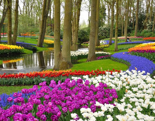 Five-Star Tulips Cruise (Rail & Cruise) 2020 | Great Rail 1