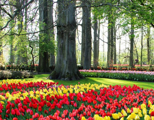 The Netherlands in Springtime Tour   Rail Discoveries 1