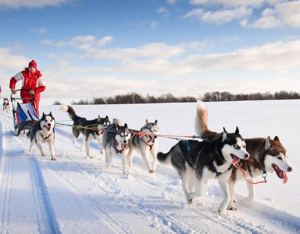 Huskies and the Northern Lights Tour | Rail Discoveries 1