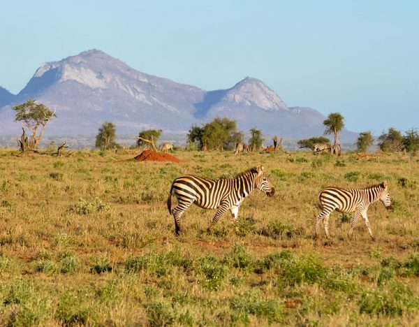 Kenya & Maasai Mara Grand Safari 2020 | Great Rail 1