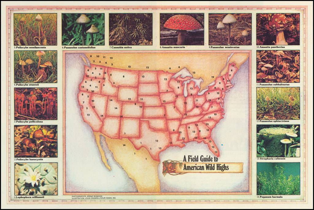 [Counterculture - Drug Culture] A Field Guide to American Wild Highs By Louis Crandell
