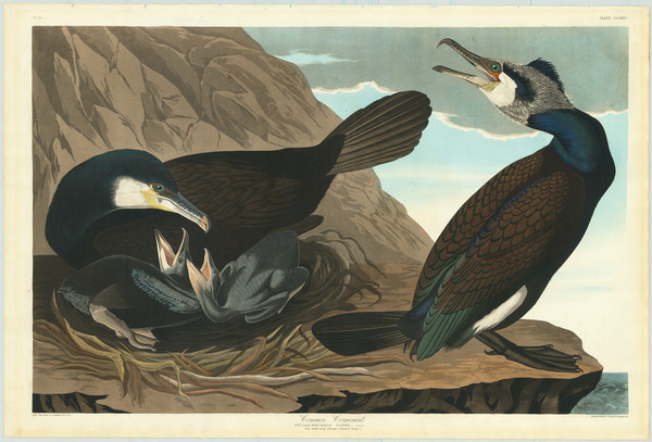 38-Curiosities Map By John James Audubon