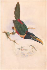 Curiosities Map By William Matthew Hart / John Gould