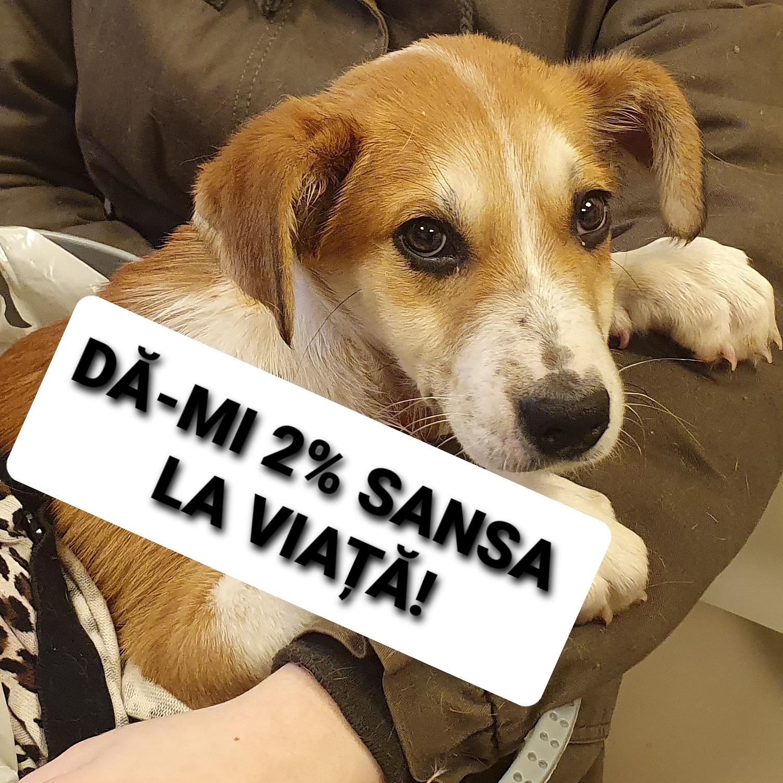 World Animal Veterinary Emissaries logo
