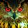 Red owl eyes