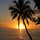 Sunset with coconut palm tree fiji