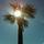 Sunpalm