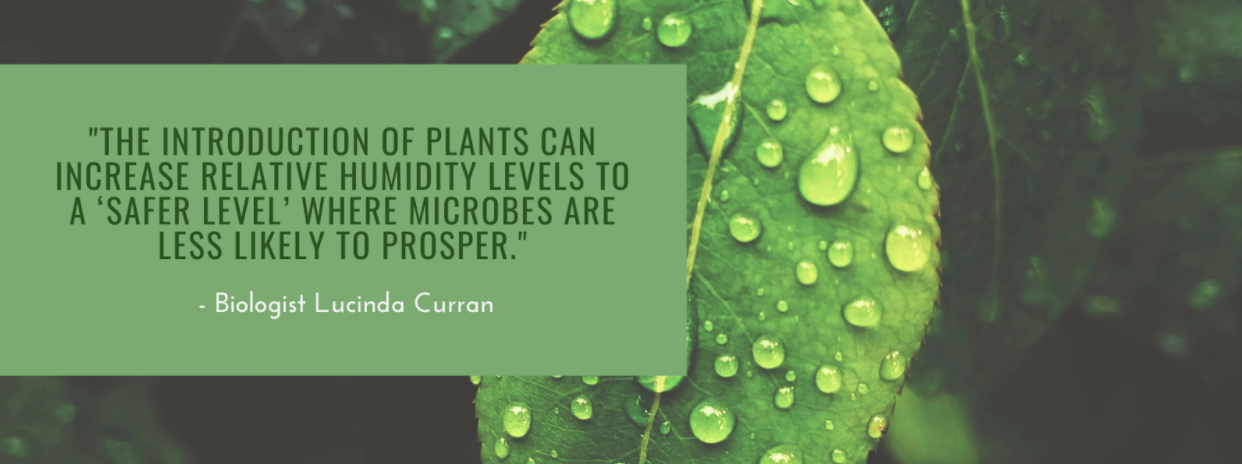 """Lucinda Curran Quote: """"The introduction of plants can increase relative humidity levels to a 'safer level' where microbes are less likely to prosper"""""""