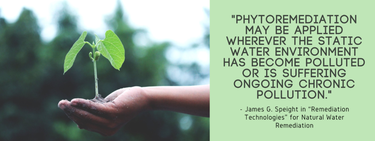 "Quote by James G. Speight ""Phytoremediation may be applied wherever the static water environment has become polluted or is suffering ongoing chronic pollution"""
