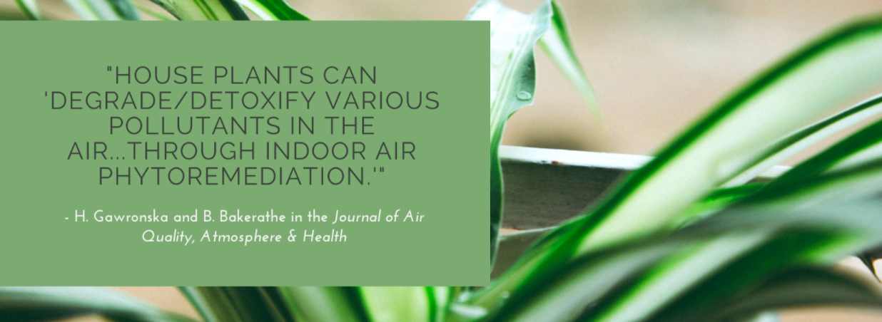 "Quote from the Journal of Air Quality, Atmosphere & Health ""House plants can degrade/detoxify various pollutants in the air...through indoor air phytoremediation"""