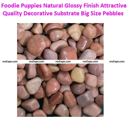 Foodie Puppies Natural Glossy Finish Attractive Quality Decorative Substrate Big Size Pebbles