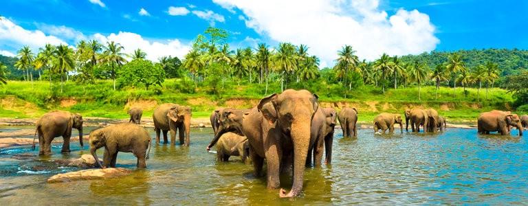 Reis til Sri Lanka med Solfaktor Eksotisk