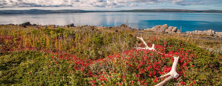 Murmansk Reseguide
