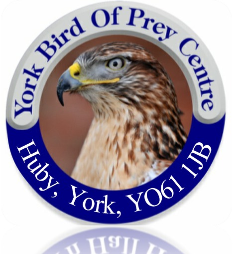 York Bird of Prey
