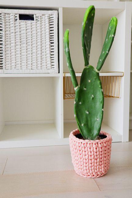 The Cactus Cozy