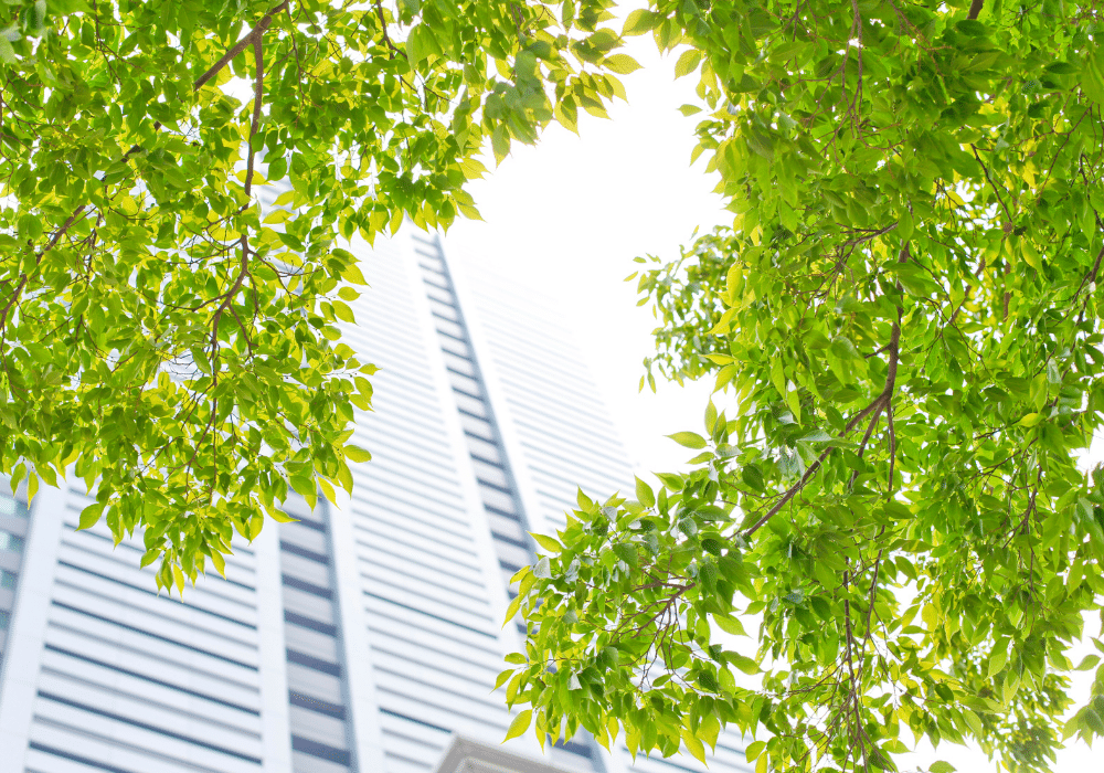 Why Building Green Is the Way to Go | Rising Star Properties