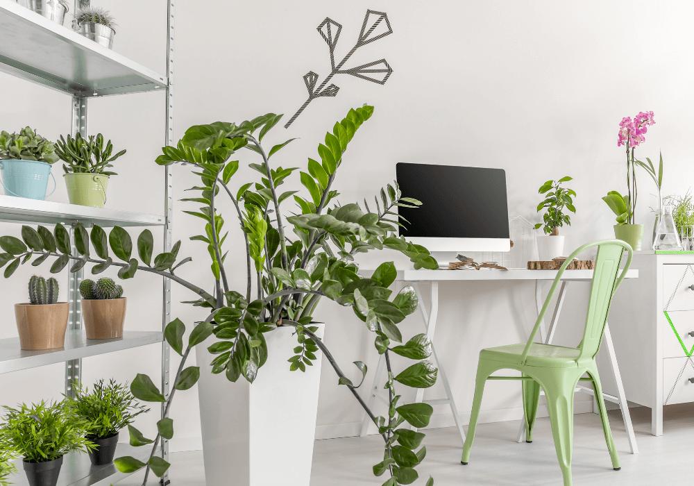 Indoor Plants Design Trend | Rising Star Properties