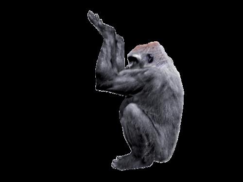 Gorilla Placement