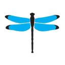 Dragonfly Digital Marketing