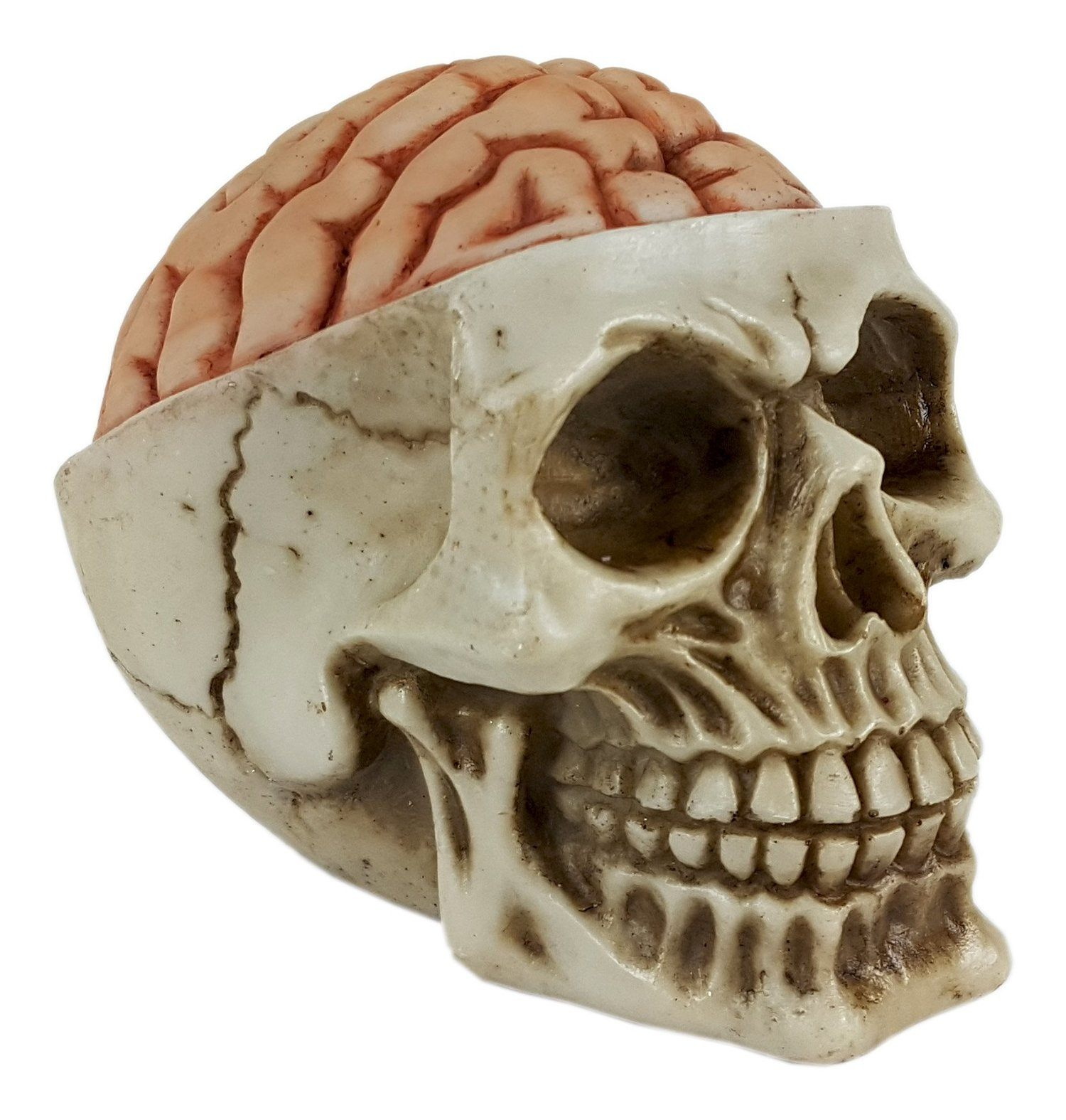 Crânio Caveira Skull Cérebro Grande Decorativo Resina