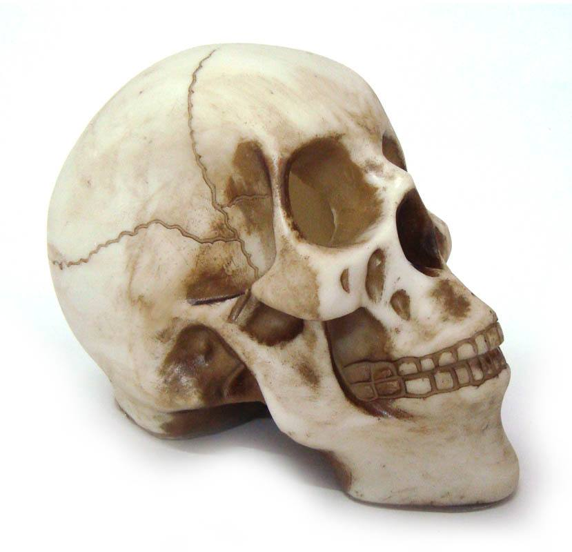 Crânio Caveira Skull Da Vinci Médio Decorativo Resina