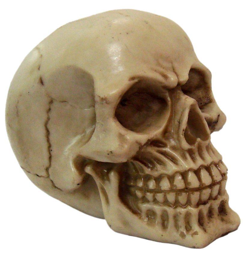 Crânio Caveira Skull Socrates Decorativo Resina