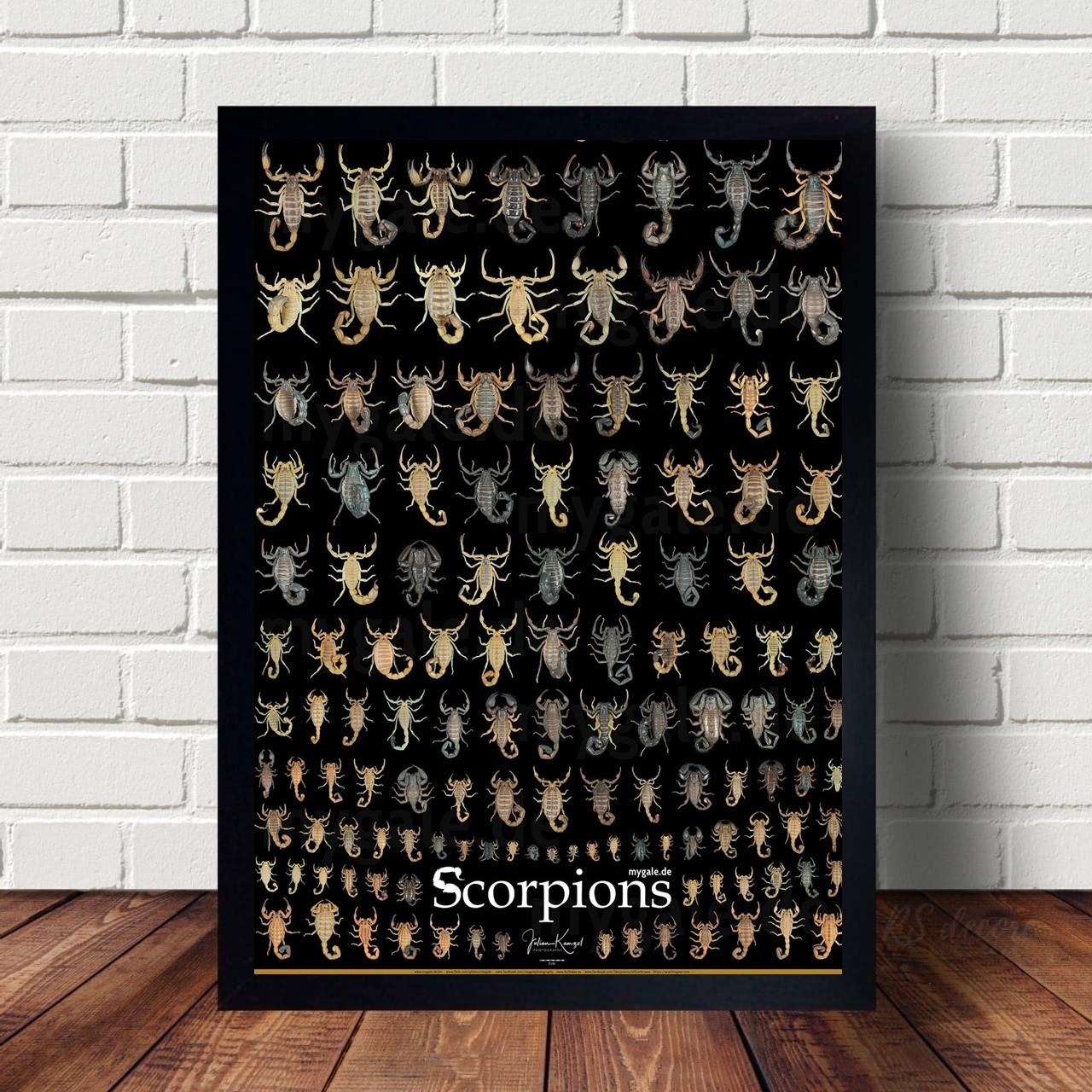 Quadro Decorativo Scorpions V