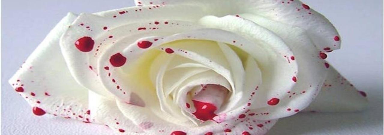 Chapter And We Run | Blood Kissed Petals by Alastríona Donovan at Inkitt
