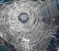what a wicked web we weave by Billyboy01