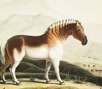 "The ""Last"" Quagga by A.R. Hellbender"