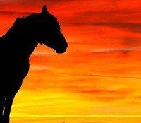 Blackhorse Park by Jordan Bruce
