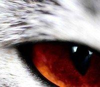 The Eyes of Kretes by Patrick Zac