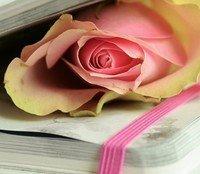 Plethora of Poetry by Behind Sapphire Eyes