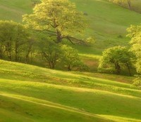 To Walk The Green by Alastríona Donovan