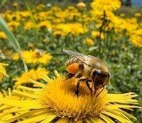 Xylophone Bumblebee by Lawrence Kinden