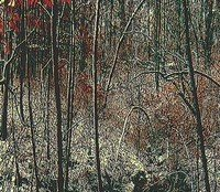 Sagas of The Ridge: The Whisper of the Leaves by Dan Brawner